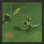 news_bugs